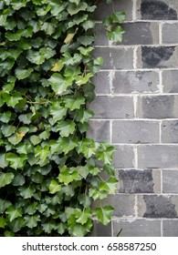 Half side of green leaves and another half of painted like bricks wall