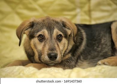 黄色い背景に半分の茶色の子犬