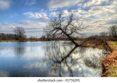 half-fallen tree on the Huron riverside (at Gallup Park, Ann Arbor, Michigan, USA)