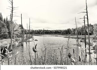 Haliburton Marshland Marsh Bog Trees Stream And Forest In The Fall