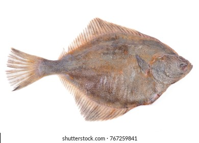 Halibut on white background