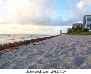 Hallandale Beach Florida sandy beach during sunrise. Algae on beach