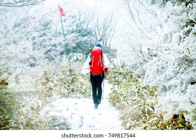 Hallasan Mountain with snow, a heritage National Park at Jeju island Korea. Winter.