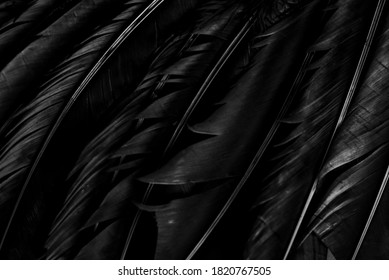 Halloween background with black raven feathers on dark grunge backdrop. Horror gothic abstract design with copyspace. Closeup of bird wing texture.