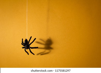 Halloween background decoration holiday concept. Black spider graphic shadow drop down from web on orange background