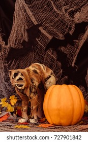 halloween background with pumpkin and cat