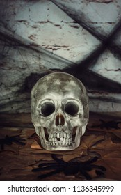 Halloween concept with Human skull on wood background