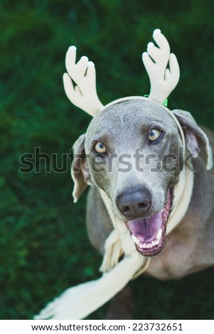 Halloween Costume Dogs Stock Photo Edit Now 223732651 Shutterstock