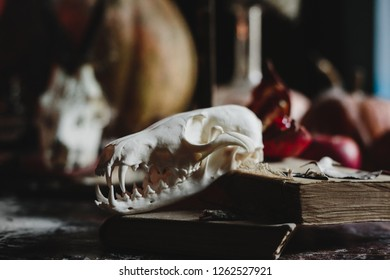 Halloween decor. 4k wallpaper. Old pumpkins, pomgranates, apples and skulls covered with dust stand on the table with net. Spooky decorations. Gothic motives.