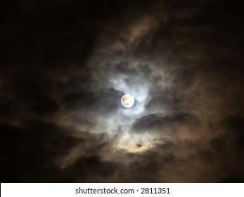 Halloween holly moon