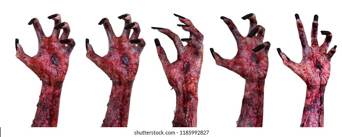 Halloween horror concept. Image of terrible zombie hands with bloody wounded, isolated on white background