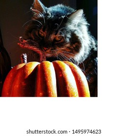 Halloween Kitty with mischievous sinister smile, cat