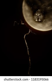 Halloween night background with moon, cat, owl