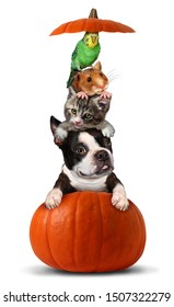 Halloween pets in a pumpkin as a vertical group of pets as a dog cat bird and hamster sitting on an orange gourd with 3D illustration elements.