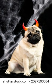 Halloween pug dog with devilish red horns sits on a black background with cobwebs and place for text. Halloween vertical postcard. halloween animals concept.