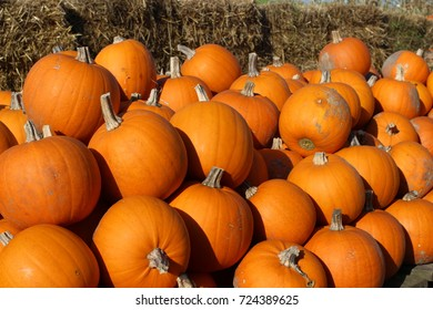 Halloween pumpkin at the farm, Happy Halloween