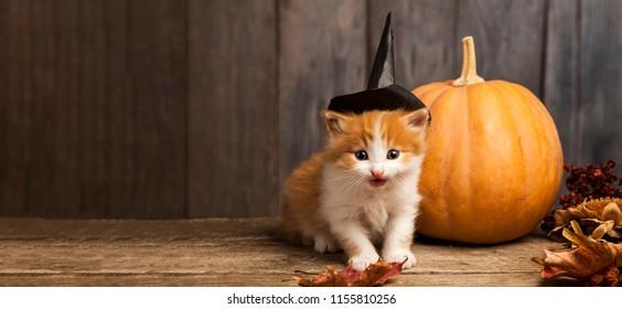 halloween pumpkin jack-o-lantern and ginger kitten on black wood background.