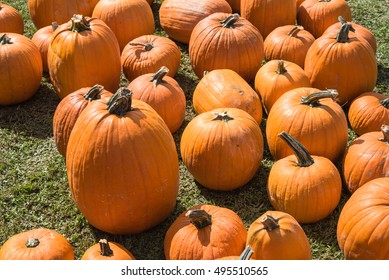 Halloween Pumpkin Patch with many bright orange pumpkins on display at community church garden. Sunny October outdoor afternoon. Background for fall, autumn, Halloween and Thanksgiving.