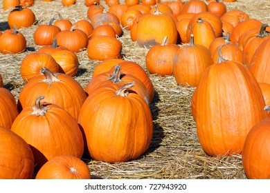 Halloween pumpkins in a field of fresh straw.