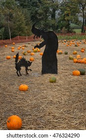 Halloween pumpkins patch with  pumpkins and scary halloween decoration for kids