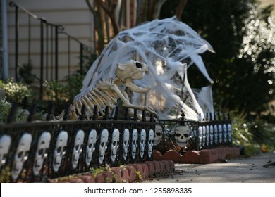 Halloween Skull Decorations Line Up Short Fence in Front Lawn of Townhome Guarded by the Bones of a Terror Dog with Cobwebs in the Background
