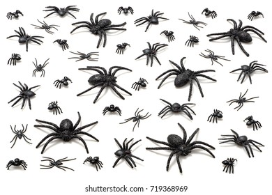 Halloween spiders isolated on white