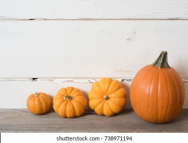Halloween or Thanksgiving Fall Harvest Small Pumpkins in a Line on Rustic Distressed Wood Table and Background for a simple design element.  Horizontal with room or space for copy, text, your words.