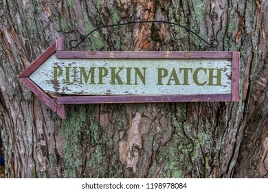 Halloween Thanksgiving Theme.  Pumpkin Patch sign closeup on a beautifully color textured tree.  Chester County, PA
