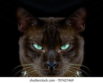 Halloween Theme, Cat scared eyes scary. Black background