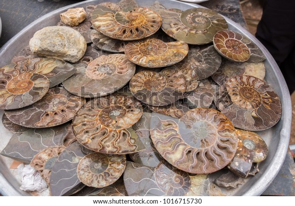 Halved Polished Ammonite Fossils Sale Souvenirs Stock Photo