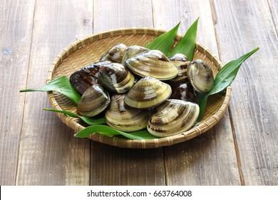 hamaguri, honhama, japanese clam, common orient clam,meretrix lusoria