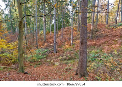Hamburg, Germany. The Harburg Hills (German: Harburger Berge), a landscape of hilly forests, in autumn. - Shutterstock ID 1866797854