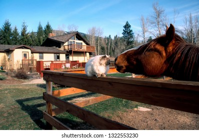 Hamilton, Montana, USA, Deer Crossing Bed & Breakfast, cat and horse friends, March 31, 2000