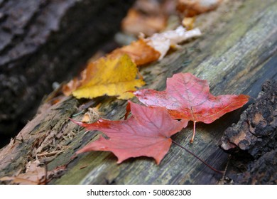 Hamilton Tiffany Falls - autumn picture of fallen leaves on the wood