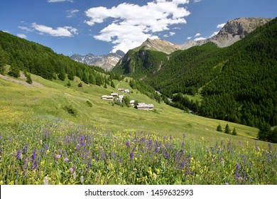 The hamlet Les Chalmettes, located above Ceillac village along Cristillan valley, with mountain range covered with snow, and pine tree forests, Queyras Regional Natural Park, Southern Alps, France