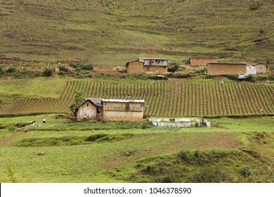 Hamlet of traditional farmhouses with herbal gardens in the highlands of Peru, surrounded by agricultural and pasture land, patatoe fields.