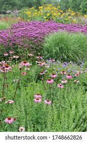 HAMM, GERMANY - 24 JULY 2015: Planting in perennial meadow style designed by Piet Oudolf in the public park Maximilianpark