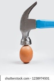 Hammer is breaking chicken egg. Concept of strength, durability, stress resistance and fortitude.
