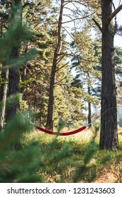 Hammock in the forest.