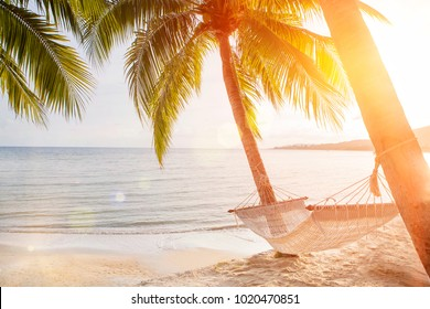 hammock on a palm tree sunset glare of the sun sea ocean sky shore sand