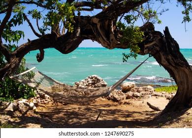 hammock under twisted tree