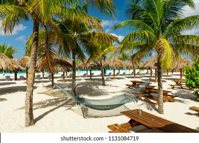 Hammocks and sunbeds under the palm trees on exotic Barbados beach in the Carribean