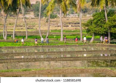 Hampi / India - Dec 2017: Green rice fields near ancient Vijayanagar city in Hampi, Karnataka. Best destination in IncredibIe India.