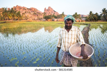 HAMPI, INDIA - JANUARY 9, 2014 : Unidentified indian man with bucket in rice paddy. Indian farmer in beautiful rice paddy and boulders in Hampi, Karnataka