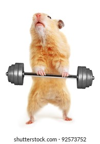 Hamster with bar isolated on white