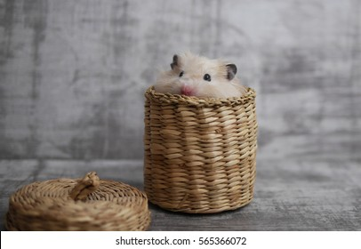 A hamster in the basket.