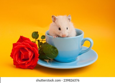 Hamster in the blue coffee cup with red rose on golden background