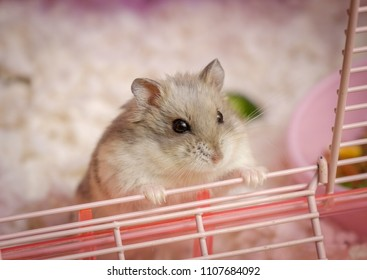 Hamster in the cage