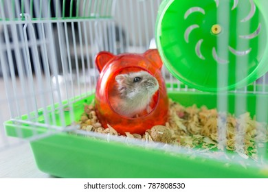 Hamster is in cage