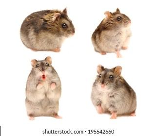 Hamster in different poses